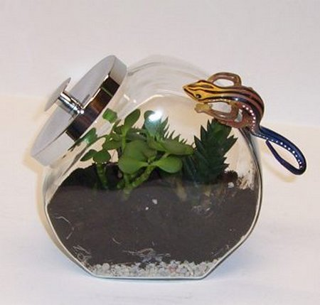terrarium-for-kids-completed