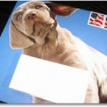 USPS Shipping Assistant Makes Life A Little Easier!