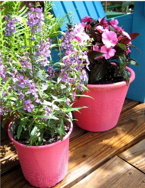 porchplants