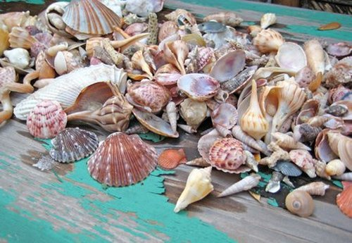 shellsfrombucket