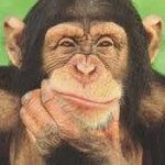 chimpanzee_thinking.jpg