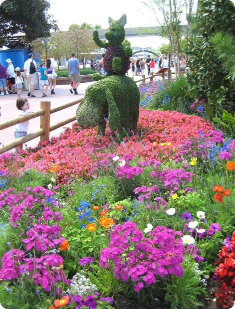 disney's epcot flower  garden festival, Beautiful flower