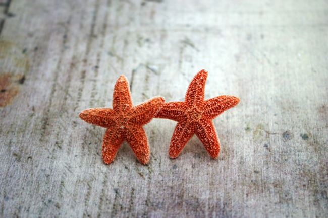 beach starfish earrings