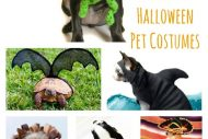Handmade Pet Costumes for Halloween {Etsy Love}