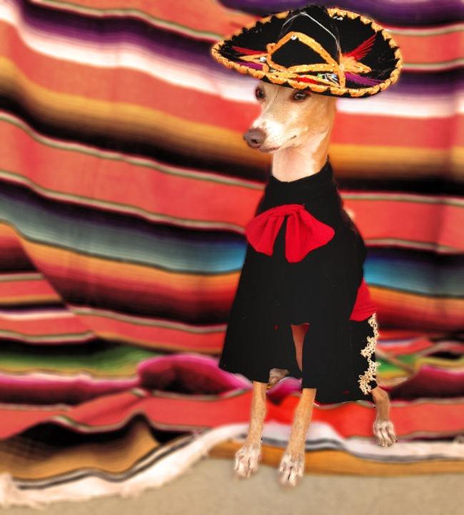 Handmade Pet Costume - El Mariachi - Olipra