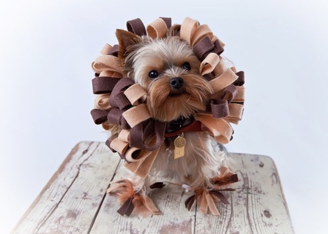 Handmade Pet Costume - Lion