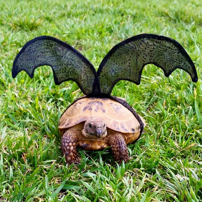 Handmade Pet Costume - Tortoise Bat