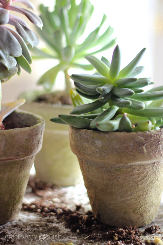 15 DIY Gifts for Plant Lovers - DIY Antique Flower Pots - EverythingEtsy