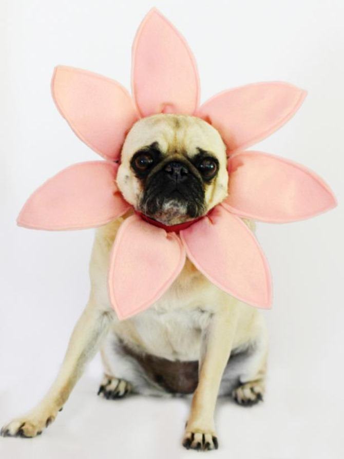 DIY Dog Costumes - Quick and Easy Ideas - Flower