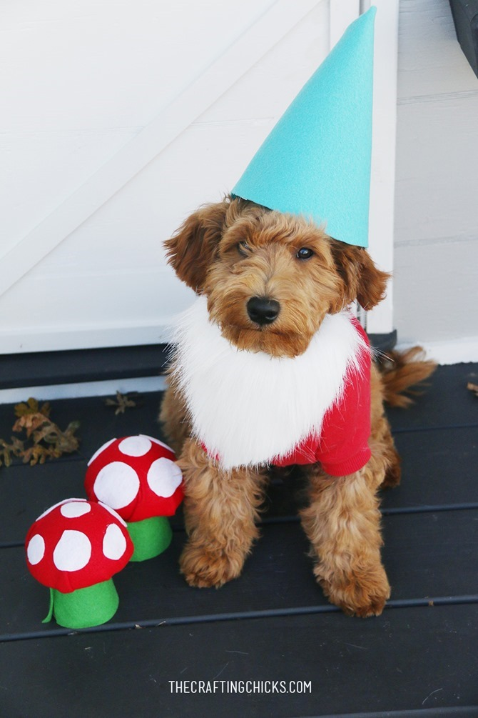 DIY Dog Costumes - Quick and Easy Ideas - Gnome