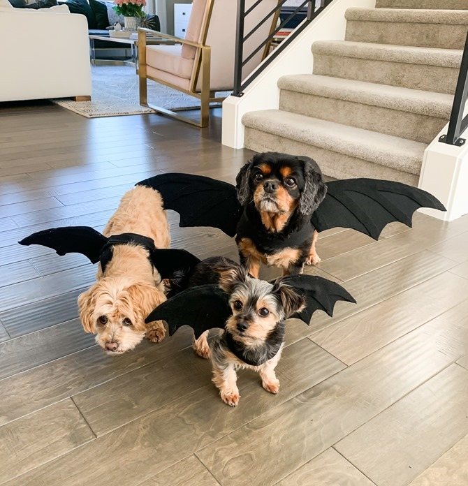DIY Dragon Dog Costume - Quick and Easy Ideas